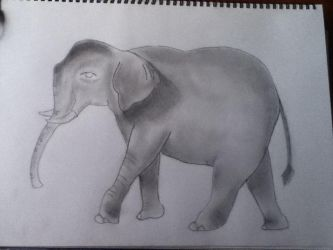 Indian Elephant by BlackFlyBird