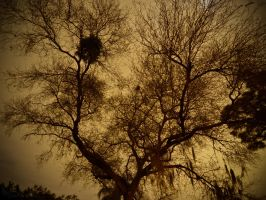 Night Time Tree Silhouette by BttrflyKisses