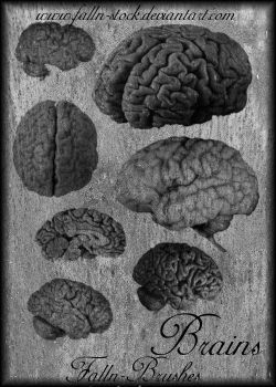 Brains Brushes by Falln-Stock