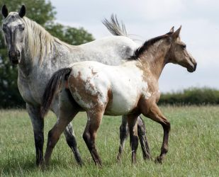 Foal Stock 05 by candigal
