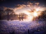 STOCK: Winter sunset scence by needanewname
