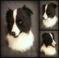 Border Collie by Qarrezel