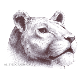 Asiatic Lion by Alithographica