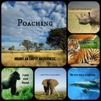Poaching - an empty wilderness (G) by Thylacinus1