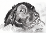 Ozzy - Traditional Pencil by Sephtis