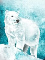 White Bear by Roma2011