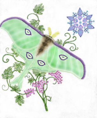 Colored_Luna_Moth by LAvenus79