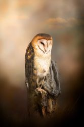 Sarah the Owl by JMOliverPhotography
