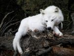 White Wolf Softmount by AdarkerNEMISIS