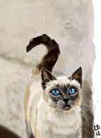 Cat Photo Study by sketchdoll