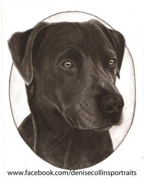 Graphite Dog Portrait by FlyingFancy1