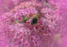 To bee or not... by Egil21