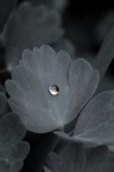 Photo - Captured Beauty VIII by tigaer