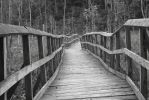 This bridge is dying by SeveredToe