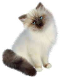 Siamese cat on a transparent background. by PRUSSIAART
