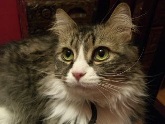 Glico the Pretty Kitty by aimeeevilpixie