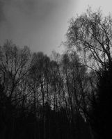 Dark Autumn by satanen