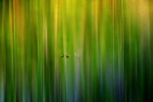 Lost in Paradise by fitrido