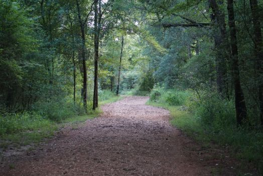 Trail 1 by Dylan40
