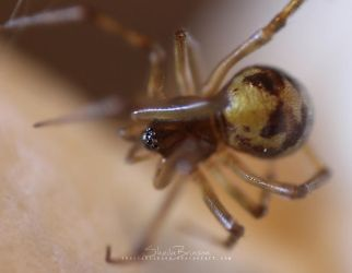 The False Widow by SheilaMBrinson