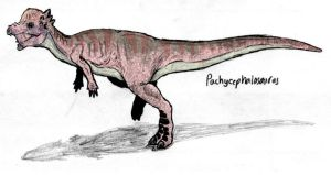 Pachycephalosaurus colored by triggamafia