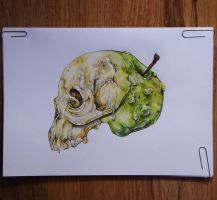 Apple. by SurrOllie
