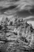 A Hill With Trees by marman44