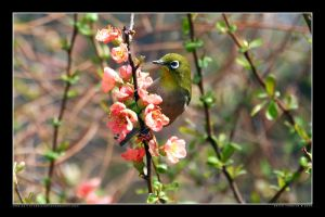 White-eye in the Park 2 by Keith-Killer