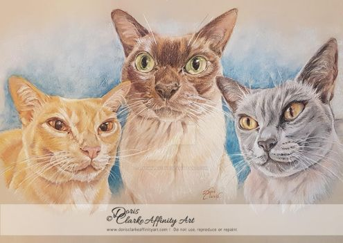 Three Beautiful Cats (Sold on Commission) by Harmony1965