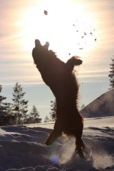 If there`s a snowball i need to catch it. by Mimosaww