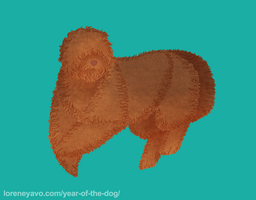 Year of the Dog - Barbet by Kelgrid