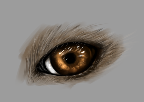 [PRACTICE] Wolf? Eye by melphith