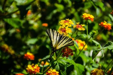 butterfly in flowers by insignificant93