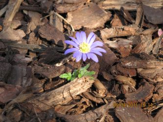 Lonely Blue Daisy by xUnboundAngelx