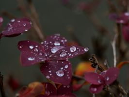 Raindrops II by Merkosh