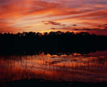 Clearwater Lake, Ocala National forest by hell-on-a-stick
