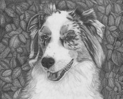 Australian Shepherd - Final by LovesDogs