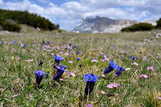 Carpet of alpine flowers II by lailalta