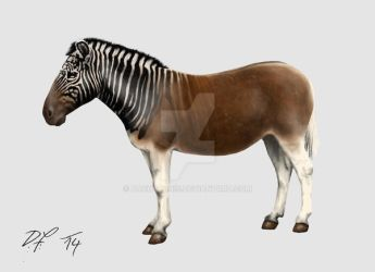 The Quagga at the London Zoo by Pachyornis