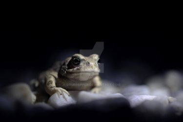Toad in the night 2 by sourpepper