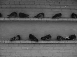 Pigeons by IreneL