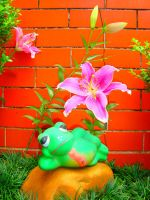The Frog and Flower by ClaudioFg