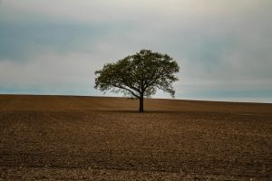 Lonely Tree! by Mincingyoda