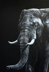 Elephant portrait by karlhcox