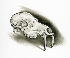 Chinese Water Deer Skull Study by Dreamspirit