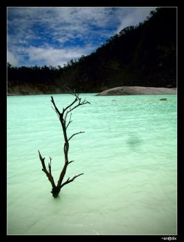 dead branch on the white lake. by SnediX