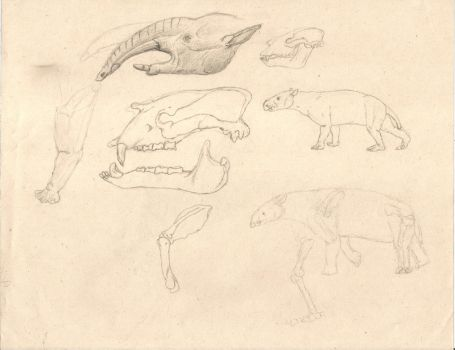 Astrapotheria sketches by Zimices