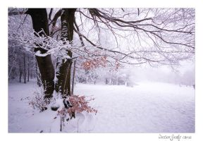 and winter came... by e1david