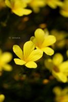 Completely Yellow by Emnais