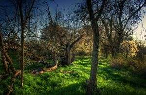 ..green_._.. by pavel89l1